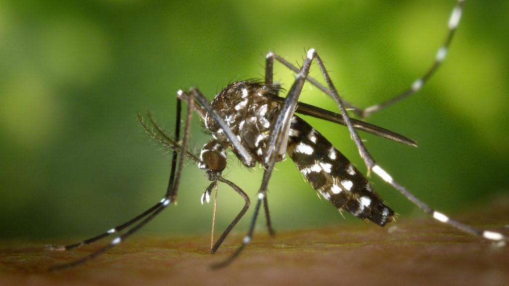 Учени откриха начин за справяне с комарите