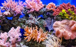 Кораловите рифове